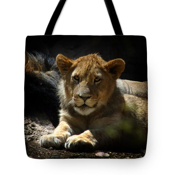 Lion Cub Tote Bag by Anthony Jones