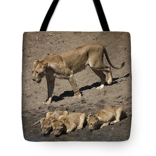 Lion Cubs And Mom Get A Drink Tote Bag by Darcy Michaelchuk