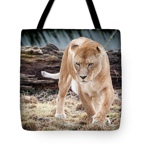 Lion Eyes Tote Bag