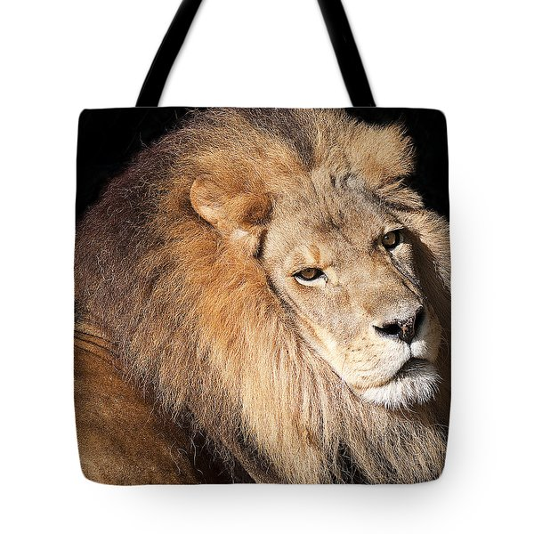 Lion Highlights Tote Bag by Kenneth Albin