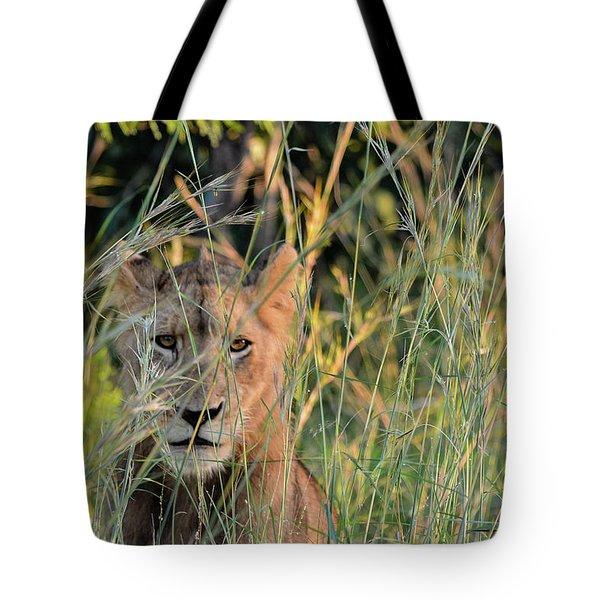 Lion Warily Watching Tote Bag
