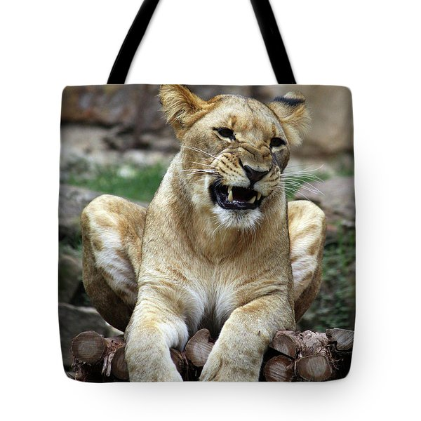 Lioness 2 Tote Bag