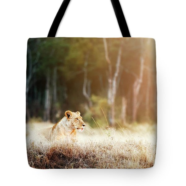 Lioness In Morning Sunlight After Breakfast Tote Bag