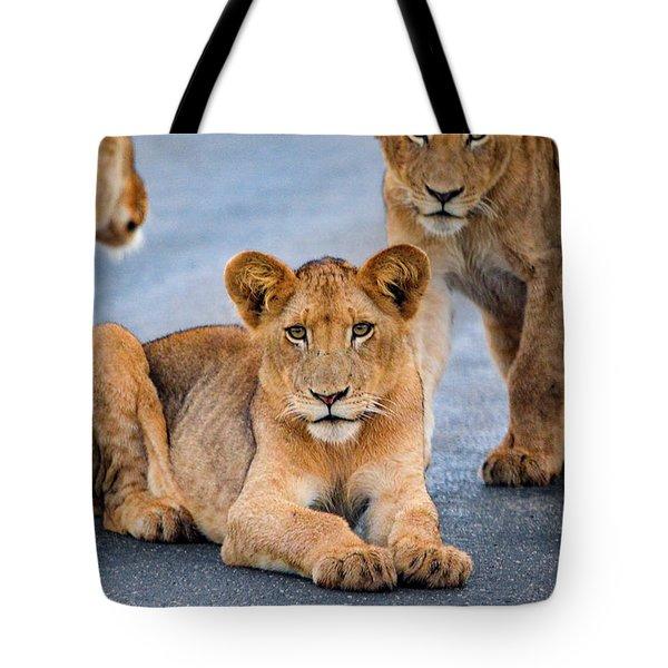 Lions Stare Tote Bag