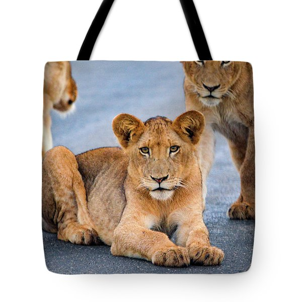 Tote Bag featuring the photograph Lions Stare by Gaelyn Olmsted