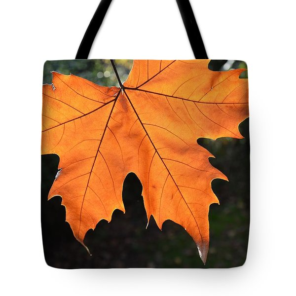 Tote Bag featuring the photograph Liquid Amber Leaf by Jocelyn Friis