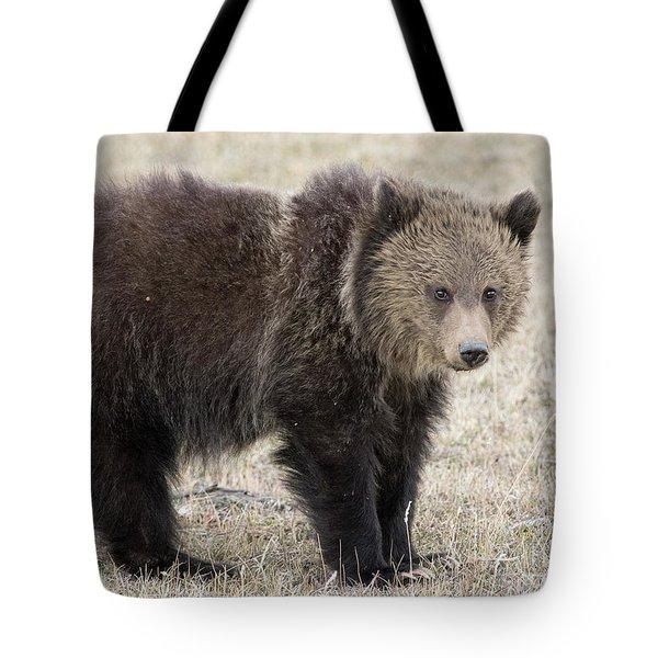 Little America Cub Tote Bag