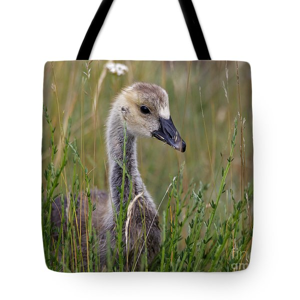 Little Baby Delight Tote Bag