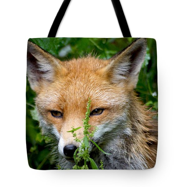 Little Baby Fox Tote Bag