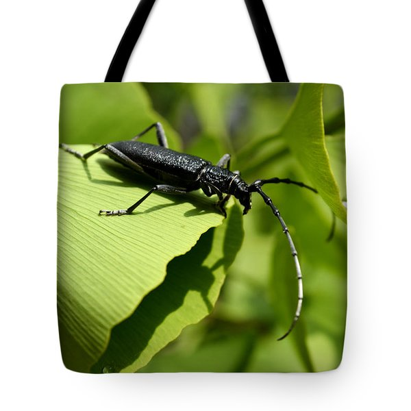 Little Beetle Tote Bag