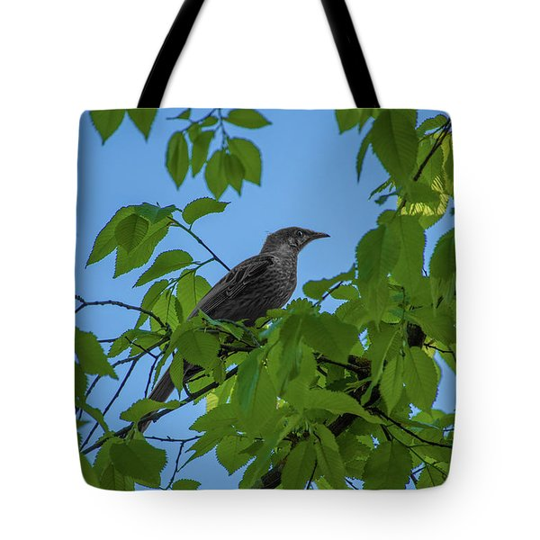 Little Bird In The Tree  Tote Bag