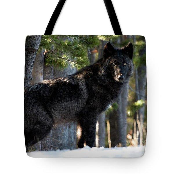 Little Blackie Tote Bag
