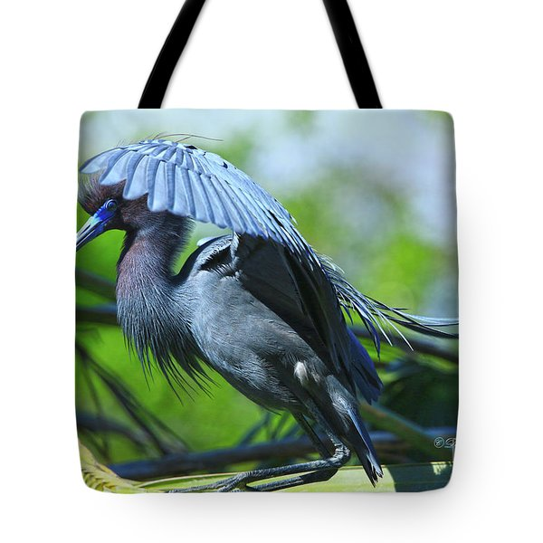 Tote Bag featuring the photograph Little Blue Heron Alligator Farm by Deborah Benoit