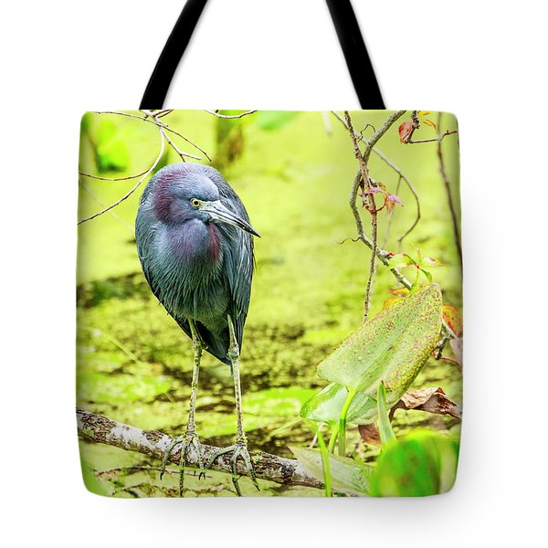 Little Blue Heron At Ollie's Pond Tote Bag