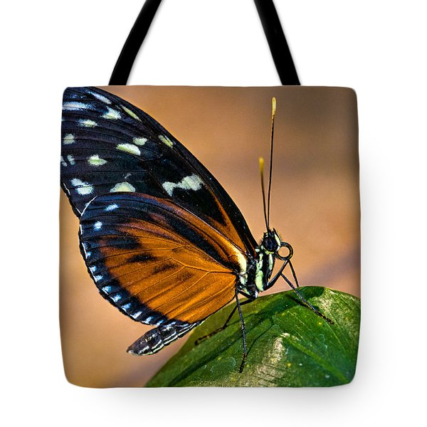 Little Butterfly Tote Bag by Christopher Holmes