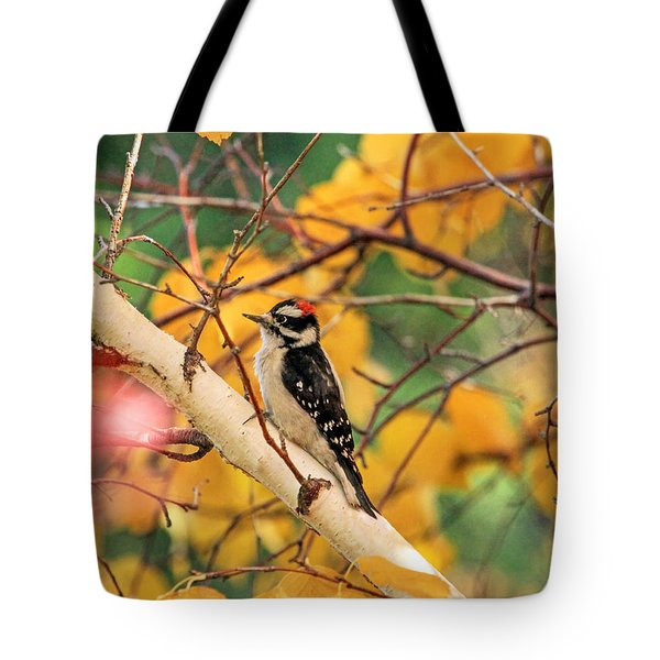 Little Downy In Autumn Tote Bag by Donna Kennedy