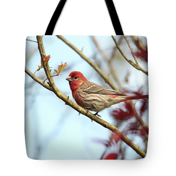 Little Finch Tote Bag
