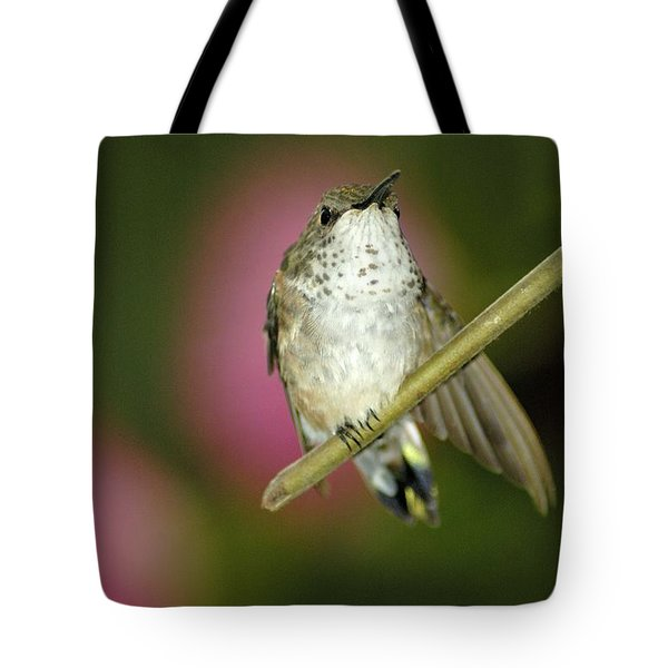 Little Humming Bird Tote Bag