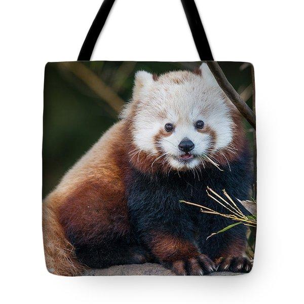 Little Massala Tote Bag by Greg Nyquist
