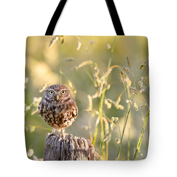 Little Owl Big World Tote Bag