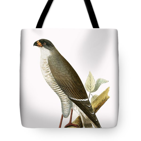 Little Red Billed Hawk Tote Bag by English School