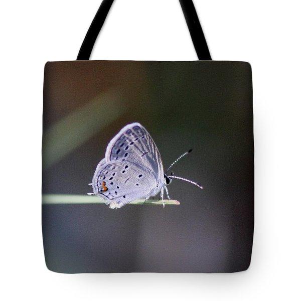 Little Teeny - Butterfly Tote Bag by Travis Truelove