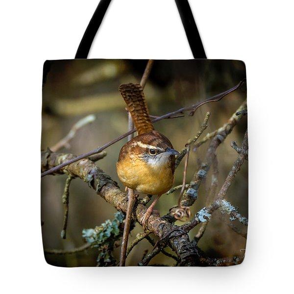Little Wren 1 Tote Bag
