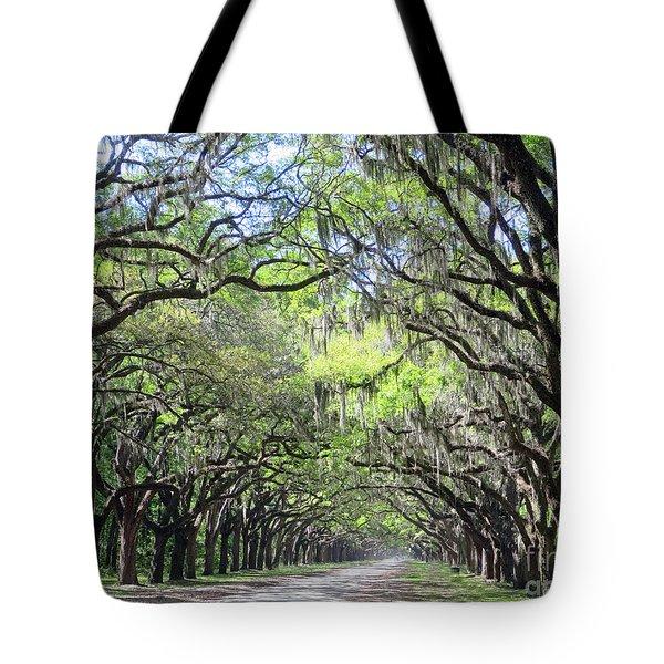 Live Oak Canopy Tote Bag