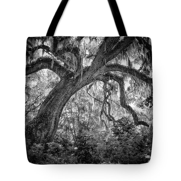 Live Oak Tote Bag