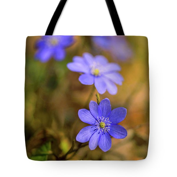 Tote Bag featuring the photograph Liverworts In The Afternoon Sunlight by Jaroslaw Blaminsky