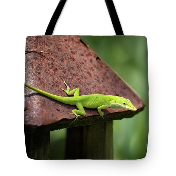 Lizard On Lantern Tote Bag by Stephanie Hayes