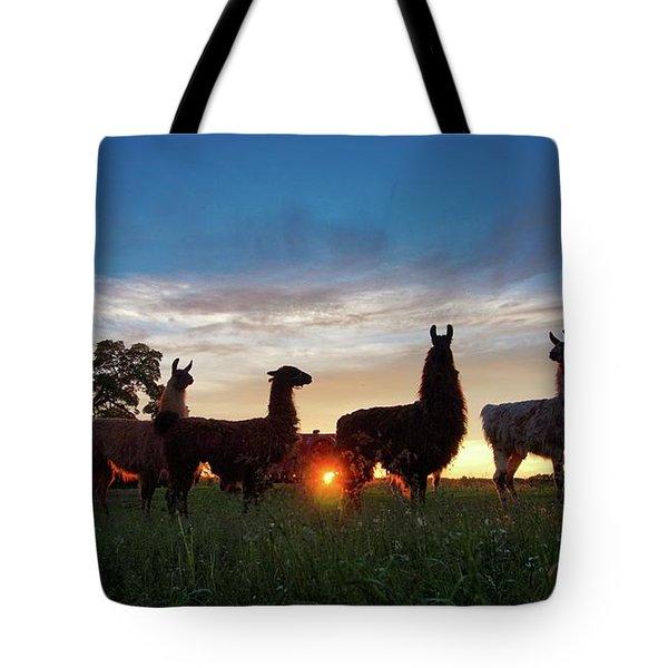 Llamas At Sunset Tote Bag