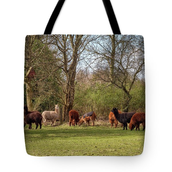 Tote Bag featuring the photograph Alpacas In Scotland by Jeremy Lavender Photography