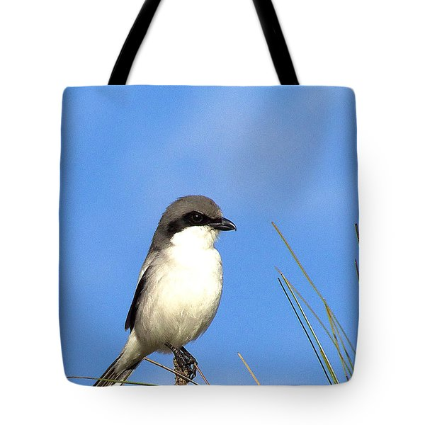 Loggerhead Shrike 001 Tote Bag by Chris Mercer