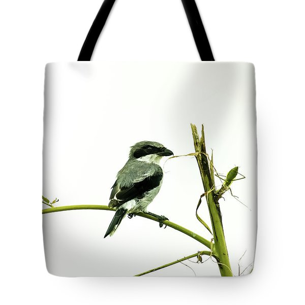 Tote Bag featuring the photograph Loggerhead Shrike And Mantis by Robert Frederick