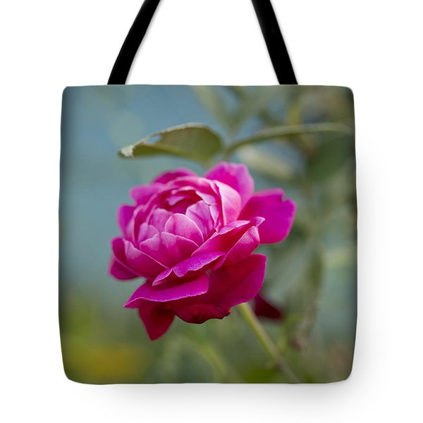 Tote Bag featuring the photograph Lokelani Rose - Maui by Charmian Vistaunet