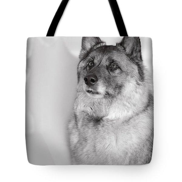 Tote Bag featuring the photograph Loki Bw by Irina ArchAngelSkaya