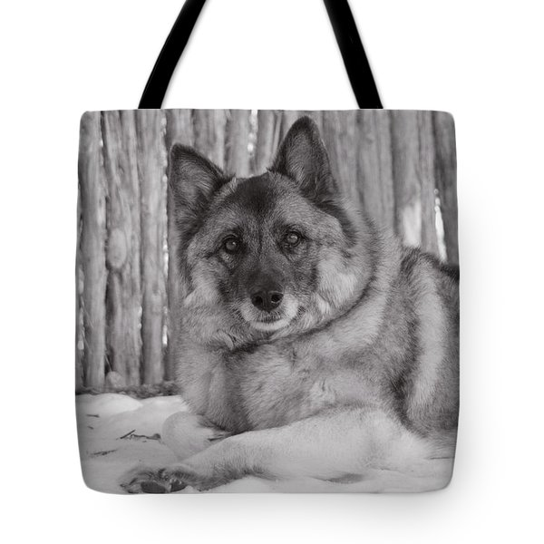 Tote Bag featuring the photograph Loki By Fence by Irina ArchAngelSkaya