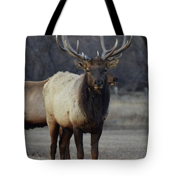 Tote Bag featuring the photograph Lone Bull by Billie Colson