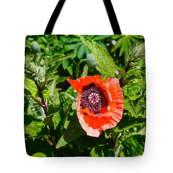 Caught My Eye Tote Bag by Allan Levin