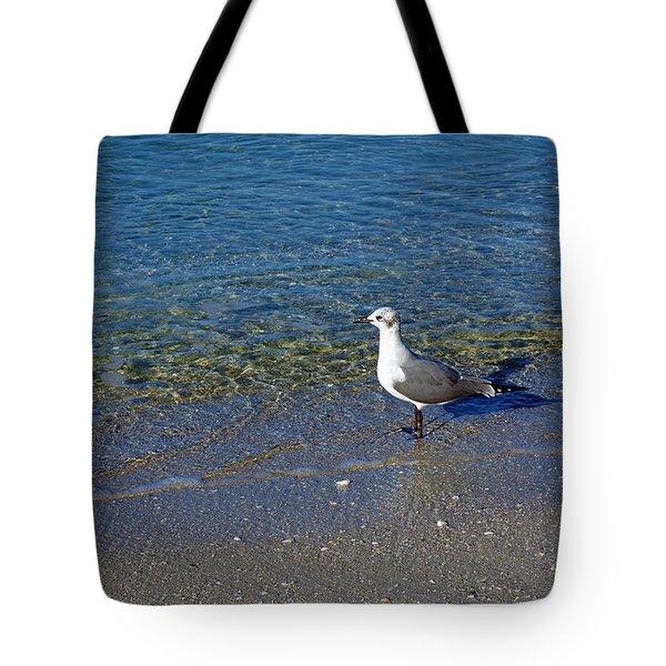 Lone Seagull At Miramar Beach In Naples Tote Bag