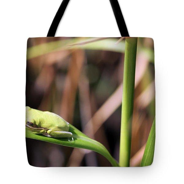 Lone Tree Frog Tote Bag