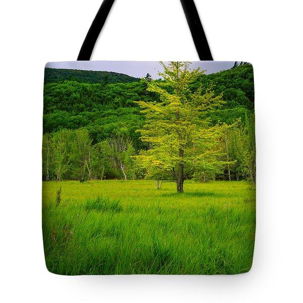 Lone Tree Sieur De Mont Woodland Acadia Tote Bag