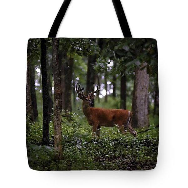 Lone Whitetail Tote Bag