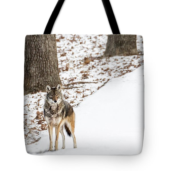 Tote Bag featuring the photograph Lone Winter Coyote by Andrea Silies