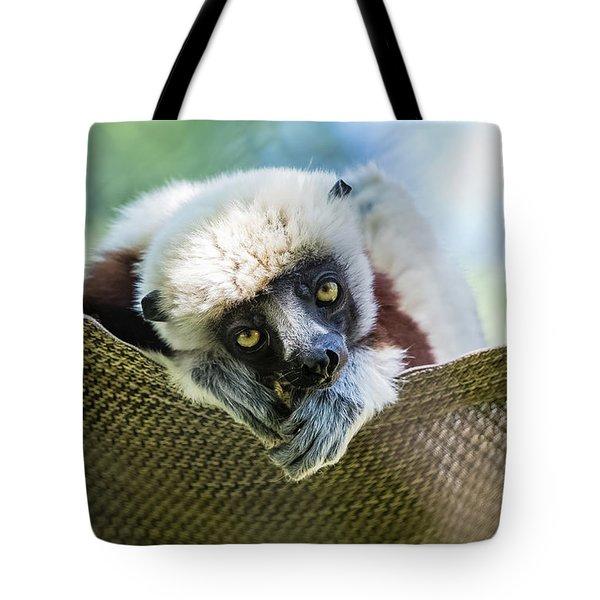 Lonely Lemur Tote Bag