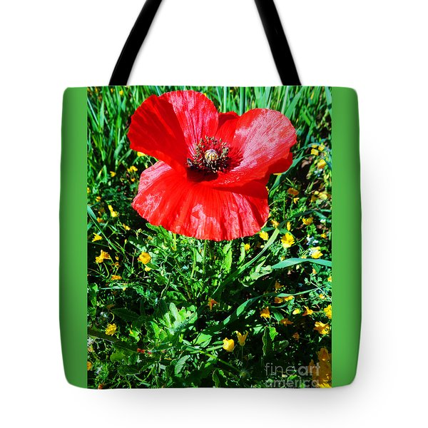 Lonely Poppy Tote Bag by Don Pedro De Gracia