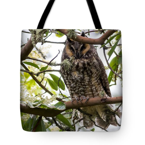 Long-eared Owl Tote Bag by David Gn