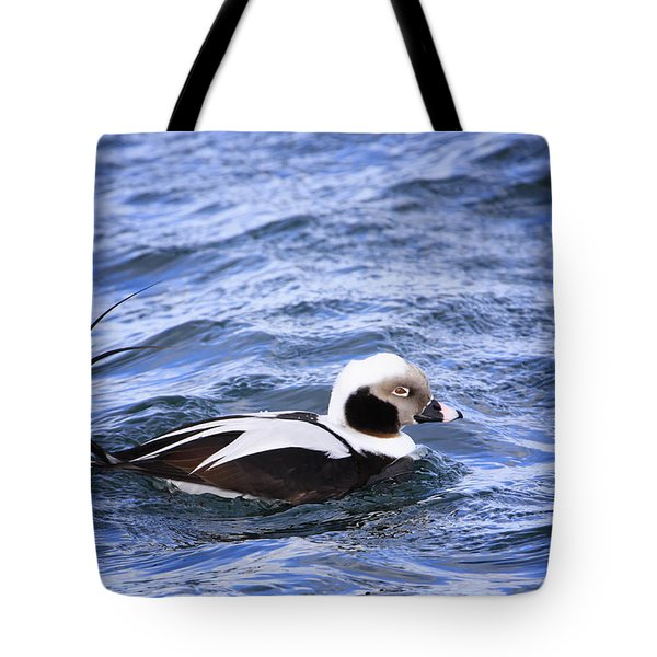 Long-tailed Duck 2 Tote Bag by Gary Hall