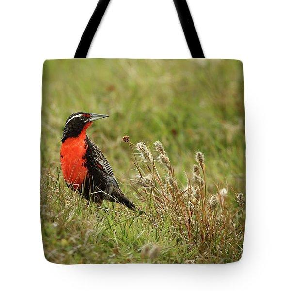 Long-tailed Meadowlark Tote Bag